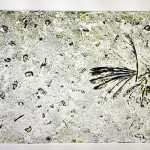 The Crow Collagraph 2 (2008)