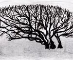 Trees & Roots VII (Blasted Trees D4)