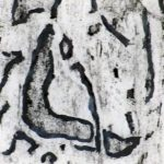 Trees & Roots VIII (2)