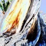 Trees & Roots XVII 1