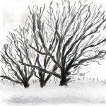 Trees & Roots VII (Blasted Trees D1)