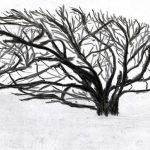 Trees & Roots VII (Blasted Trees D5)