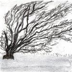 Trees & Roots VII (Blasted Trees D2)