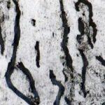 Trees & Roots VIII (1)